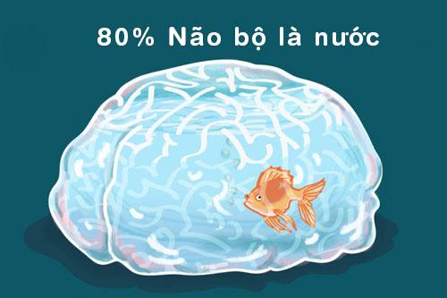 80% khối lượng của não chính là nước